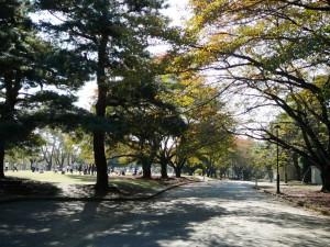 川越氷川神社⑩